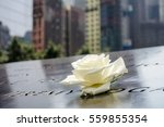 a single rose that is left by... | Shutterstock . vector #559855354
