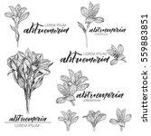 flower logo. alstroemeria....   Shutterstock .eps vector #559883851