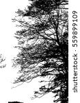 realistic tree silhouette ... | Shutterstock .eps vector #559899109