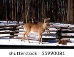 Deer At Valley Forge National...