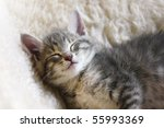 Stock photo sleeping kitten on a white sheepskin 55993369