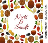 nuts  kernels and nutritious... | Shutterstock .eps vector #560022721
