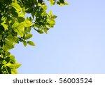 Green foliage on blue sky - stock photo