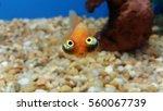 Hilarious Fish Face Expression...