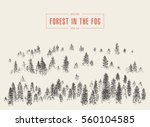 Misty Fog In Pine Forest On...