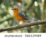bird on a branch | Shutterstock . vector #560119489