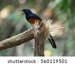 bird on a branch | Shutterstock . vector #560119501