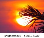 sunset | Shutterstock . vector #560134639