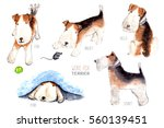 Wire Fox Terrier Character  Do...
