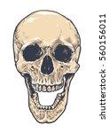 anatomic grunge skull vector... | Shutterstock .eps vector #560156011
