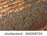 honeycomb full of bees. apiary | Shutterstock . vector #560208724