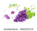 watercolor illustration of... | Shutterstock . vector #560232115