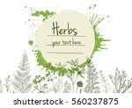 herbs and flowers painted green ... | Shutterstock .eps vector #560237875