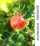 apple  tree | Shutterstock . vector #56026078