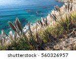 Reed With Clear Blue Sea On The ...