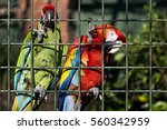 Colorful Parrots Inside A...