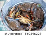 unique blue crabs. fishing on... | Shutterstock . vector #560346229