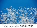 White Winter Branches On Blue...