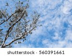 beautiful cloud and sky with...   Shutterstock . vector #560391661