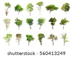 isolated trees on white... | Shutterstock . vector #560413249