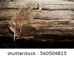 dark nature | Shutterstock . vector #560504815