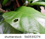 insect from eating of worm ... | Shutterstock . vector #560535274