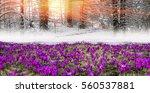 fantastic landscape ... | Shutterstock . vector #560537881