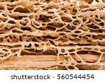 abstract wood plank texture... | Shutterstock . vector #560544454