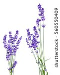 Bunch Of Lavender Flowers On...