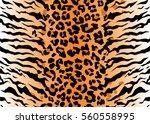 leopard tiger jaguar texture... | Shutterstock .eps vector #560558995
