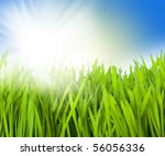 closeup of the green grass | Shutterstock . vector #56056336