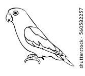 lovebirds parrot with a beak... | Shutterstock .eps vector #560582257
