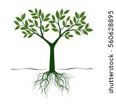 green tree and roots. vector... | Shutterstock .eps vector #560628895