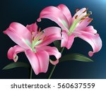 Pink Lilies Isolated On A Dark...