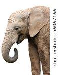 Isolated Portrait Elephant At...