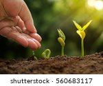 agriculture and plant growing...   Shutterstock . vector #560683117