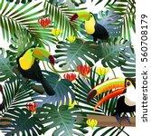 toucan tropical bird in a... | Shutterstock .eps vector #560708179