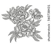 hand drawn spring peony flowers ... | Shutterstock .eps vector #560738431