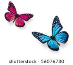 Stock photo monarch butterfly in flying positions in bright blue and vivid pink isolated on white studio shot 56076730