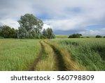 road in field               | Shutterstock . vector #560798809