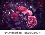 Stock photo roses in the garden vintage pastel 560803474