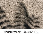 leaves shadow on wood wood... | Shutterstock . vector #560864317