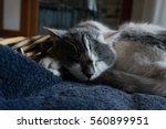 cute cat sleeping on a pillow... | Shutterstock . vector #560899951