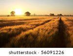 Sunrise Over The Fields Of...