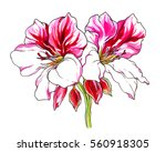 pink white spring tropical... | Shutterstock . vector #560918305