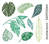 tropical palm leaves graphic set | Shutterstock .eps vector #560952064