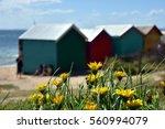 yellow flowers on the beach ... | Shutterstock . vector #560994079
