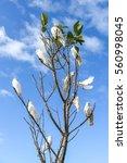 Group Of White Cockatoo Perche...