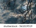 Full Moon Night  Bare Tree...