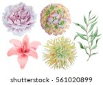 set with flowers. rose. peony.... | Shutterstock . vector #561020899